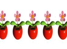 5 Dahamistenblumen 01 Kopfbild!