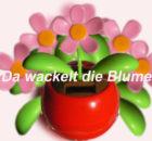 da-wackelt-die-blume