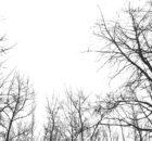 fpoe-klima-1030-grau